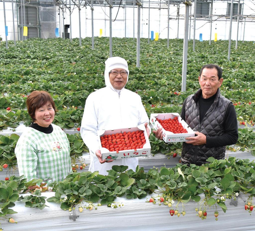 画像:帰ってきた最高のいちご!和歌山県九度山町奥いちご農園さんのいちご